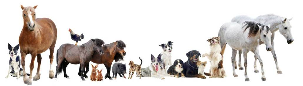 group of animals © cynoclub - Fotolia.com