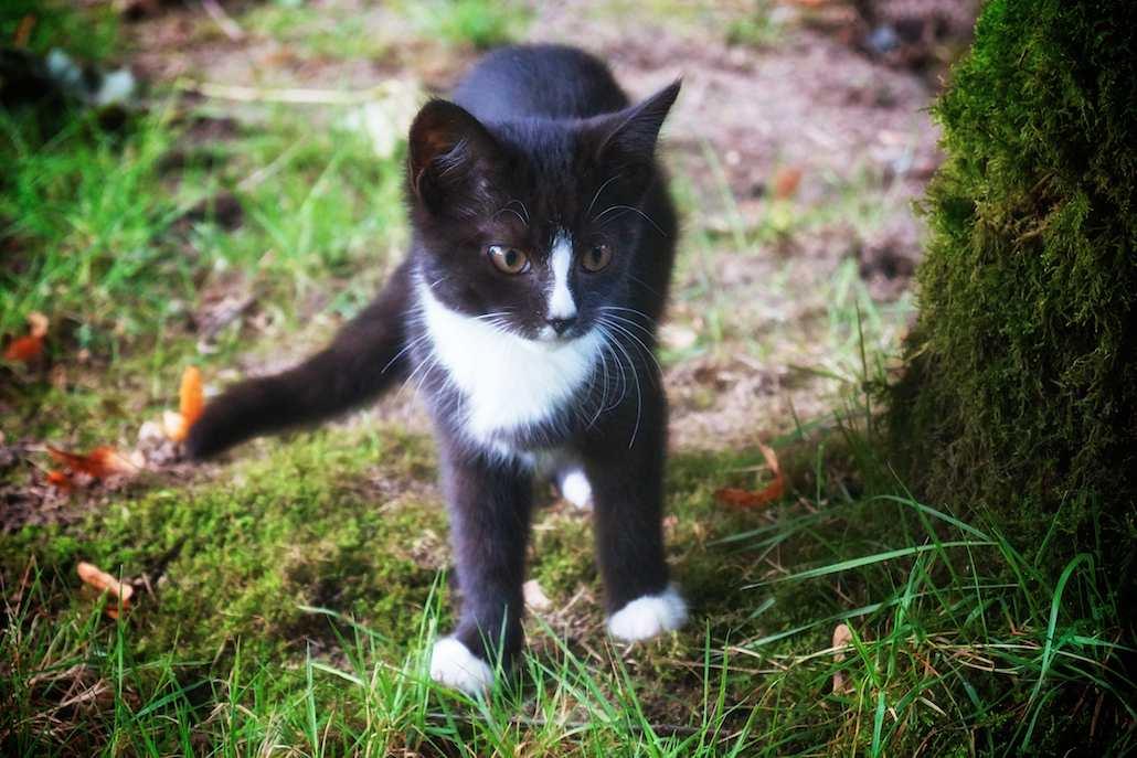 Katze Heike Stelljes Tierbetreuung 372