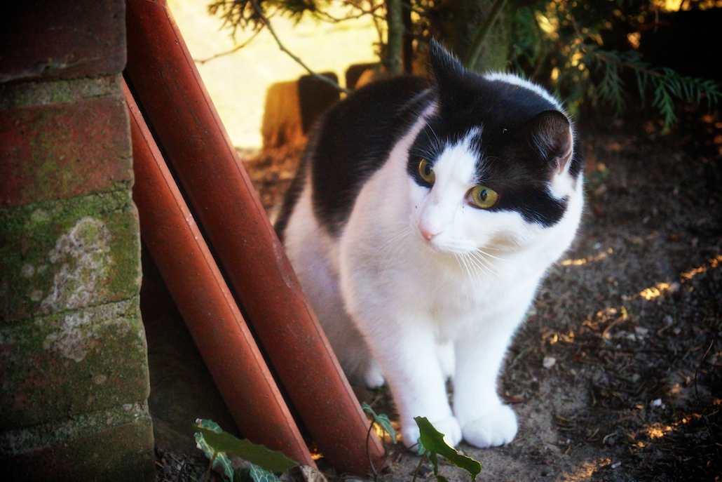 Katze Heike Stelljes Tierbetreuung 373